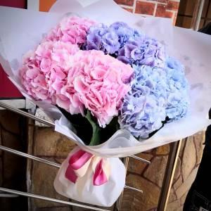 Букет 9 веток гортензии розовой и голубой R722